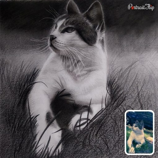 Pet Charcoal Drawing From Photo