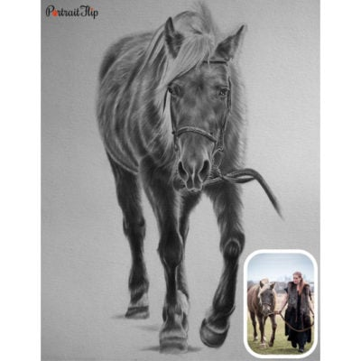 Horse pencil sketch from photo