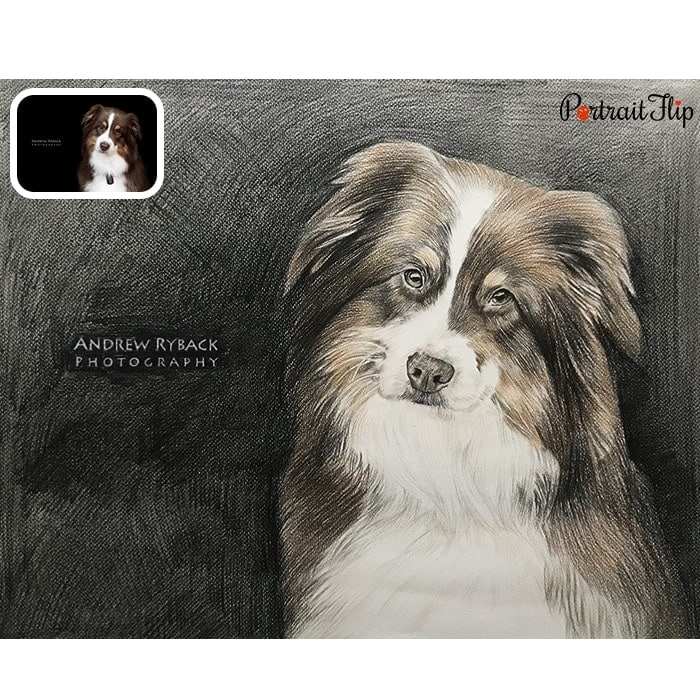 pet colored pencil painting
