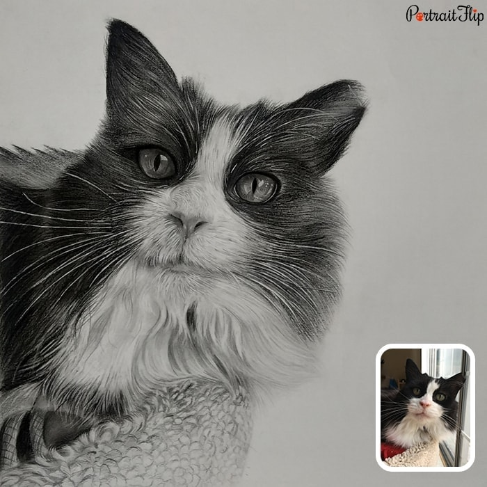 furry cat charcoal drawing