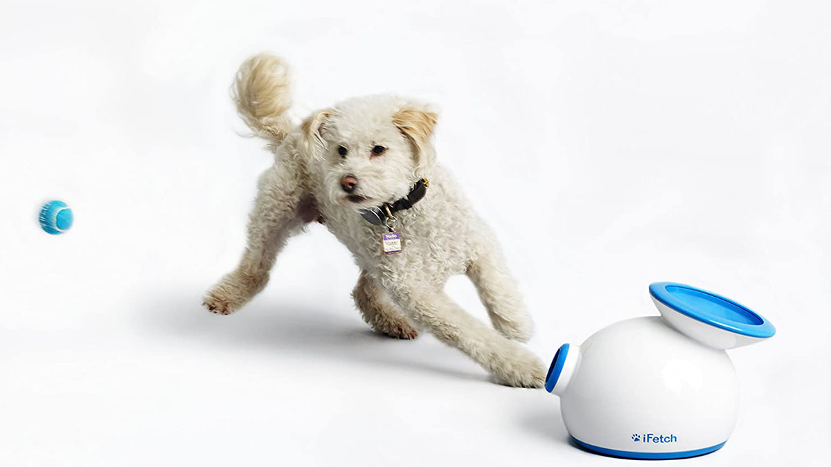 ifetch automatic ball thrower with a dog on a white background