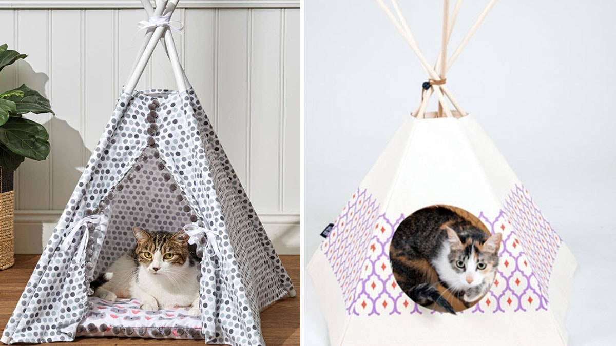 Kitty Tent with two cats